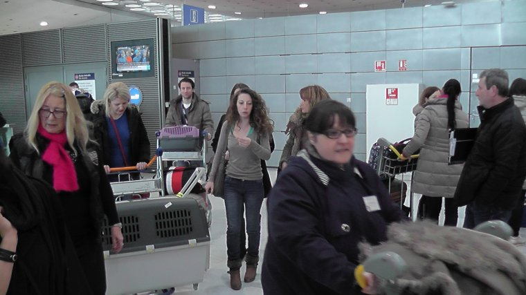 """Les premiers pensionnaires du """"LES PETITES PATTES""""sont arrives en France"""