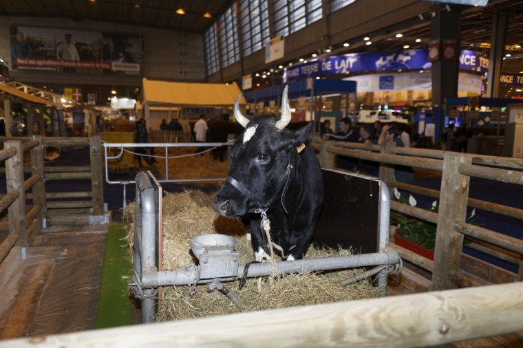 Fine est l'égérie du Salon International de l'Agriculture 2017
