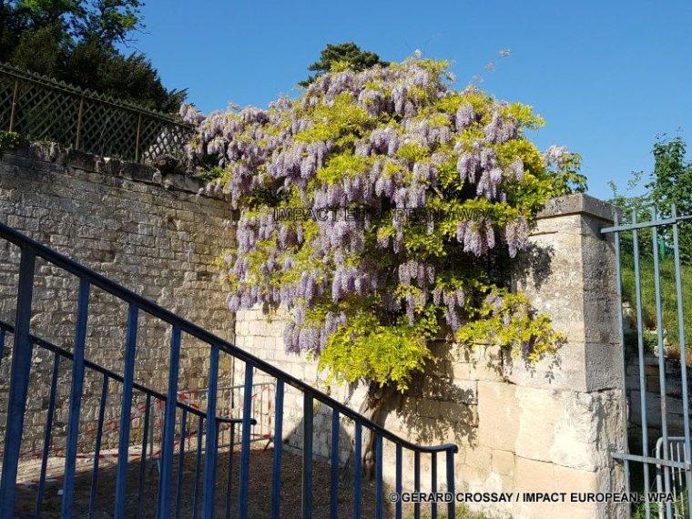 Le Jardin paradisiaque de la Kolymbetra dans la Vallée des Temples en Sicile