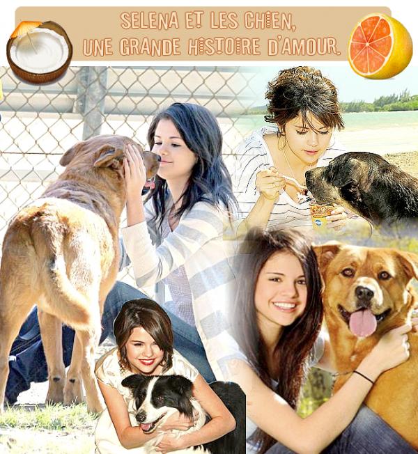 Les chiens & Selena : Une grande histoire d'amour.