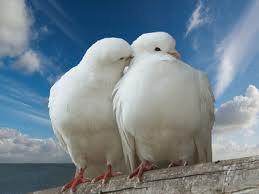 L'amour n'est pas un défaut de n'importe quel objet dans cette vie que vous aimez