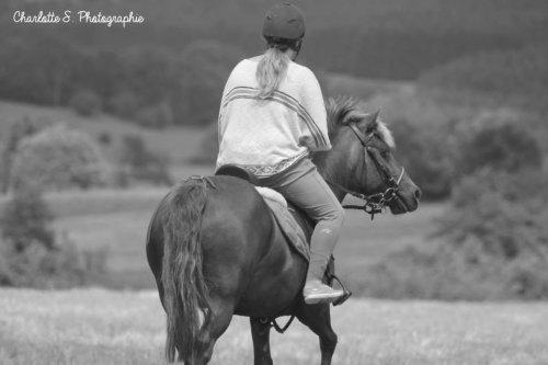 """"""" Faites du cheval un compagnon et non un esclave, vous verrez quel ami extraordinaire il est. """""""
