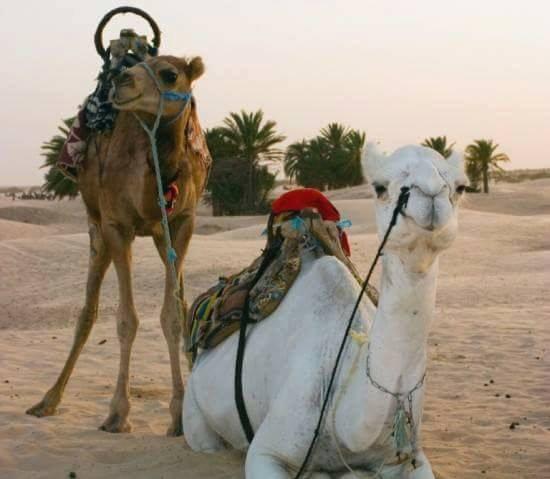 ma tunisie  ( DOUZ )