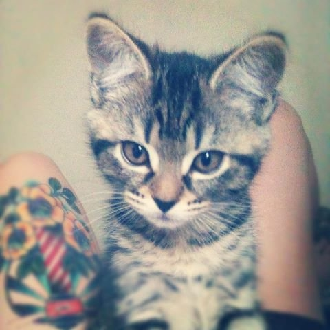 My cat :P