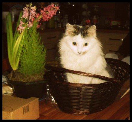 - Une maison sans chat est un aquarium sans poisson.  -