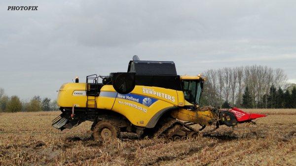 maïs grain 2013