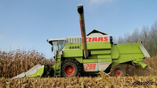 Maïs grain 2014
