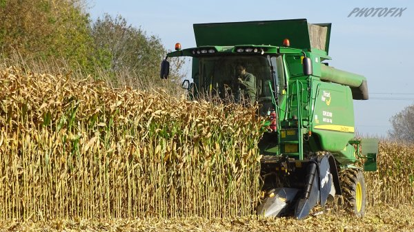 maïs grain 2015