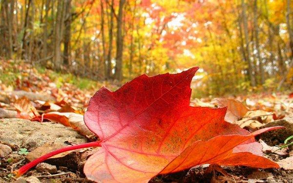 ...et tombe la feuille d'automne