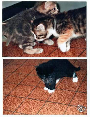 cc je vous présente le ptit chaton femelle de mes enfants