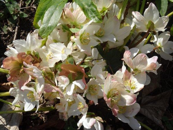 Faune et flore