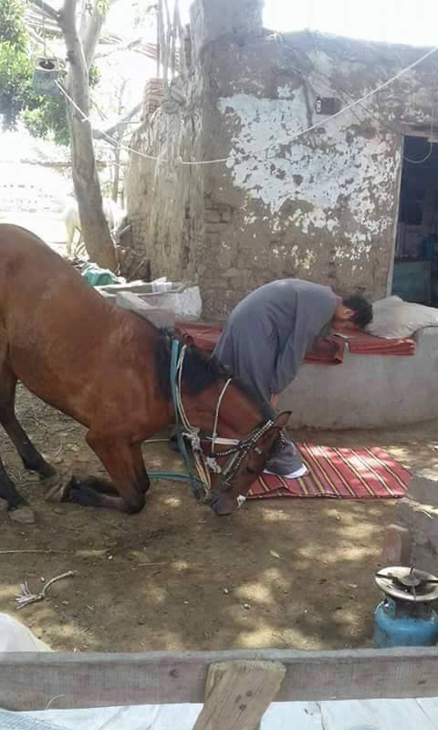 شوفوا سبحان الله حتى الحصان يصلي مع صاحبه