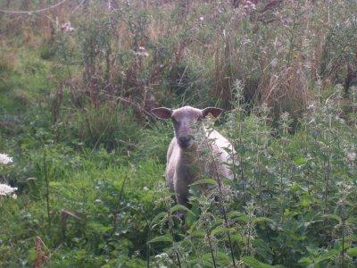 .: Mouton!! :.