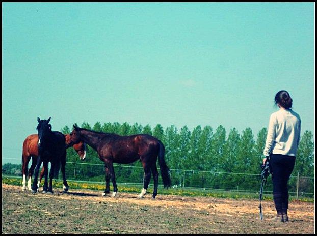 Il y a des chevaux et des moments qu'on n'oublie pas.