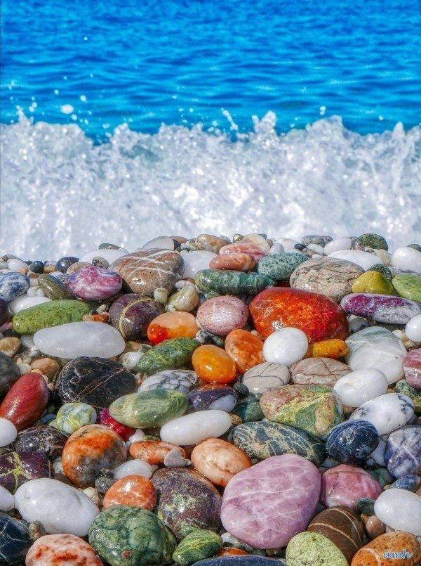 Belle vie dans la mer