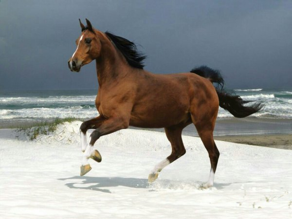 J adore les chevaux
