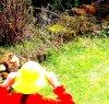 Kiwi--Fotow