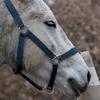 horse-shadow