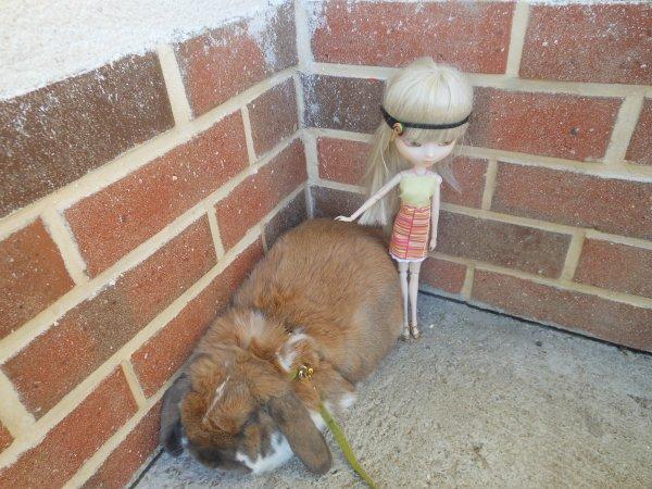 petites poses avec mon lapin (Biscuit )