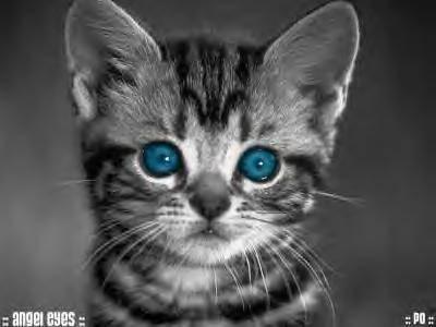 un beau petit chat