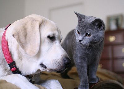 toujours le meme chat en bebe et mon ancien chien