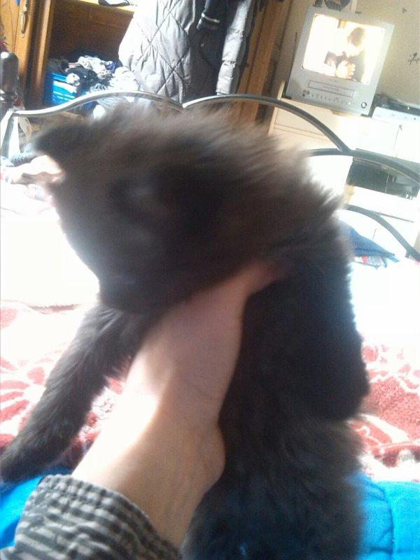 Un de mes chatons trop mimi