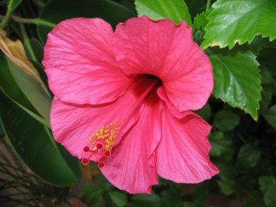 Vacances Aux Baleares Fleur Des Tropiques Ma Vie Nostalgie