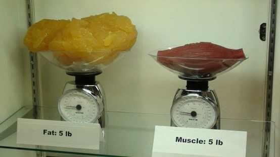 Kilos de graisse, d'eau et de muscle.. Wtf ?