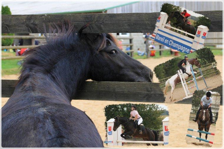 Fête du cheval 2014 ce 21 septembre !
