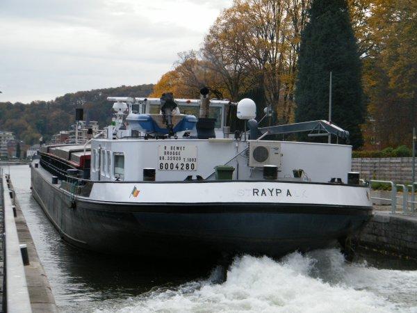 RUSTIKA (NL), MALEKE (B), RAYPA (B) ...