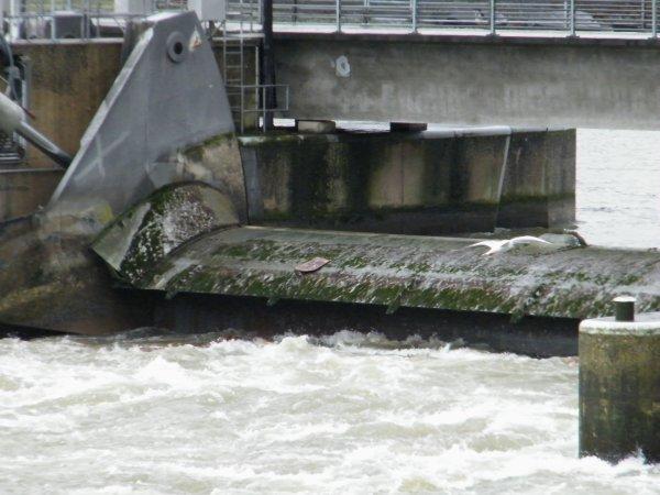 La Haute Meuse redémarre... Retour du régime crue pour la navigation  > 300 m³/sec. > priorité avalant