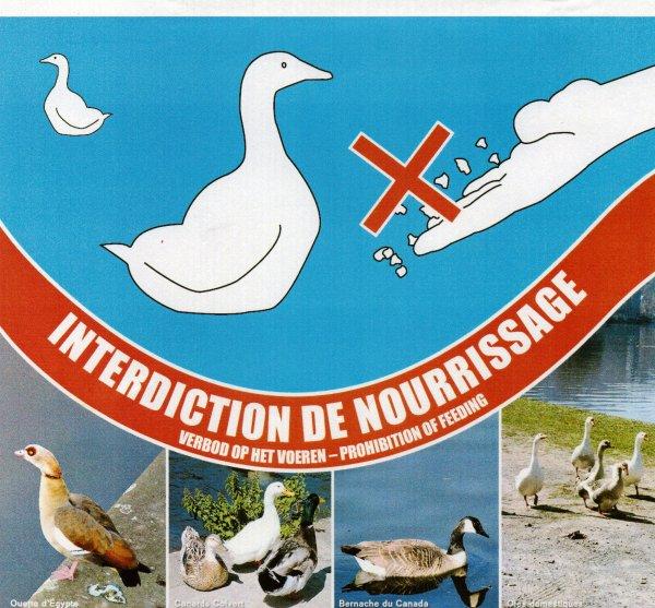 CRHM - La Haute-Meuse... transparente n° 68 - Juin 2012 >>>> Stopper le nourrissage des oiseaux d'eau ?