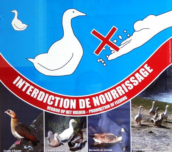 INTERDICTION DE NOURRISSAGE DES OISEAUX D'EAUX !