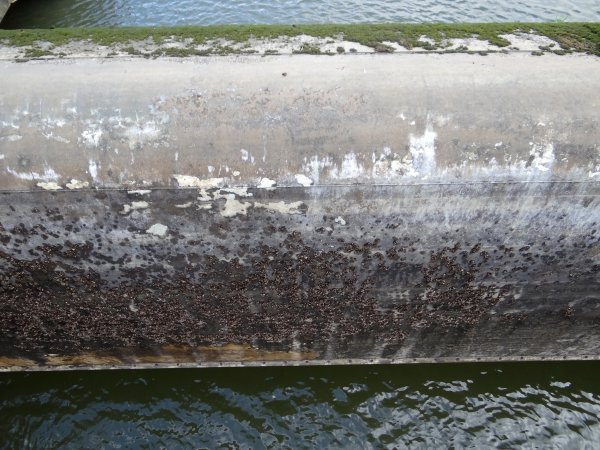 Météo favorable à la prochaine remise en eau des biefs de la Haute-Meuse... 150 ans d'aviron à Namur, le week-end de 6 & 7 octobre 2012   ;)