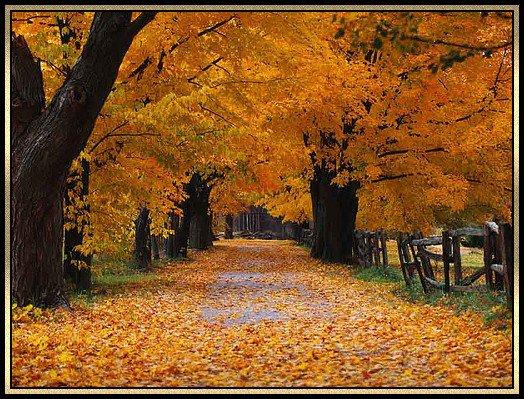 Parmi les feuilles mortes ...