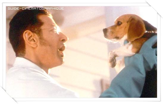 Comme chiens et chats (2001)