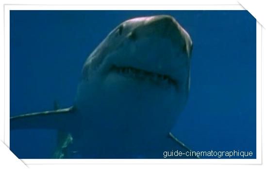 Shark attack 2 : l'attaque des requins tueurs (2000)