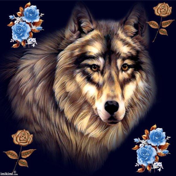 trop beau le loup