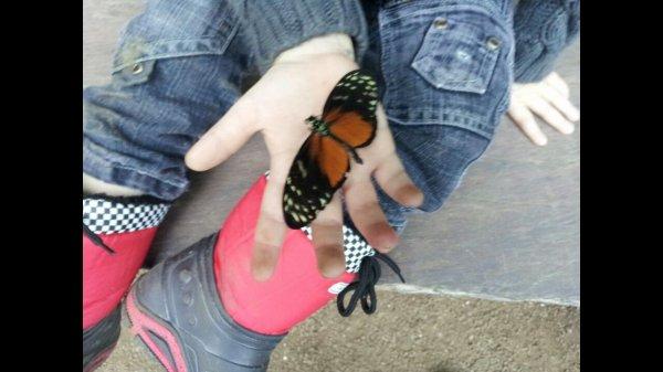 Un beau papillon dans la main de mon fils