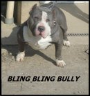 Photo de blingblingbully