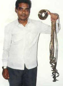 La longueur cumulée des ongles de la main gauche de Shridhar Chillal (Inde)  était de 7,05 m lorsqu\u0027on les a mesurés le 4/02/2004.
