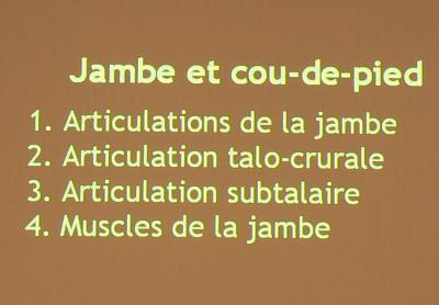 Jambe et coup de pied anatomie 2e quadri - Hematome jambe suite coup ...