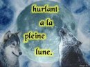 Photo de loups-solitaire-6000