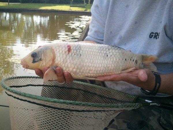 Pêche à Tongres