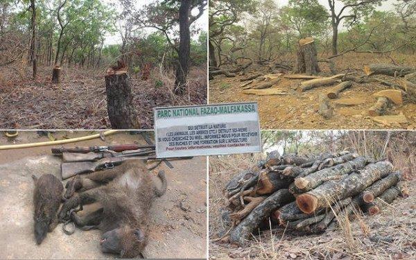 Togo, Braconnage au Parc National Fazao-Malfakassa : Complots. Corruption. Trafics. Mafia. Au ministère l'Environnement.