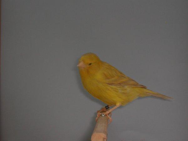 isabel geel 2013 NR22