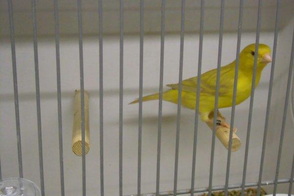 vogel 2014
