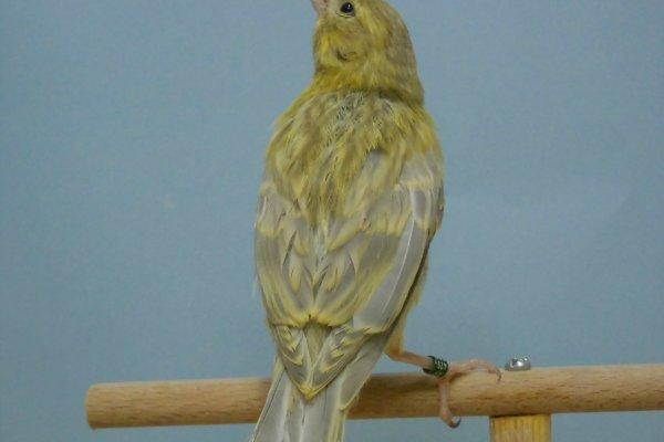 2014 Agaat geel onyx