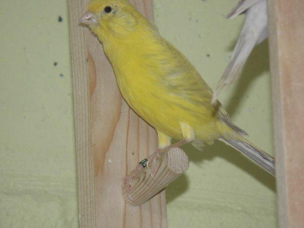 vogels 2014
