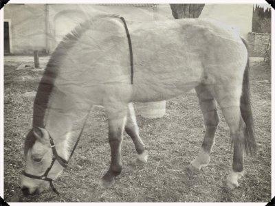 """poney d'amour ......<3"""""""